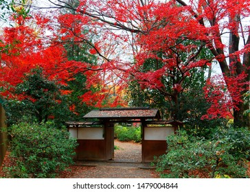 A roofed wooden gate in the forest with beautiful autumn foliage and maple leaves fallen on the ground in Rikugi-en Park, a famous traditional Japanese garden and a tourist attraction in Tokyo, Japan