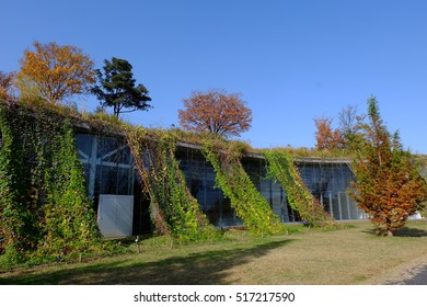 Rooftop garden and green curtains, Tokyo, Japan