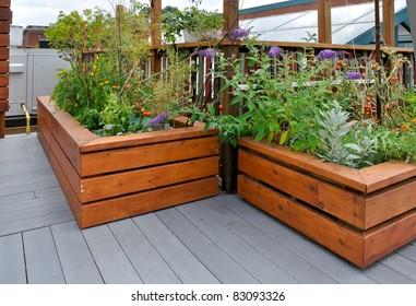 rooftop garden on urban building