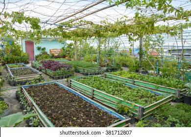 Rooftop Garden Vegetable Growing Vegetables On The Of Building