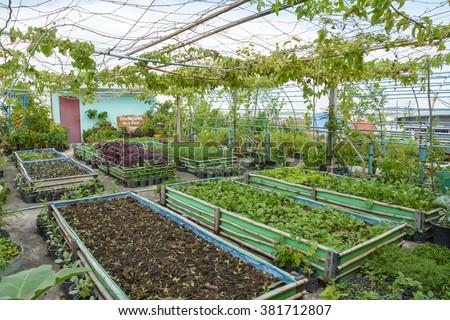 rooftop garden rooftop vegetable garden growing stock photo edit rh shutterstock com vegetables on rooftop growing vegetables on rooftop