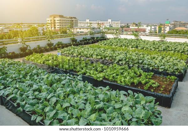 Rooftop Garden Rooftop Vegetable Garden Growing Stock