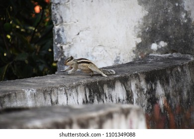 Rooftop with a squirrel.