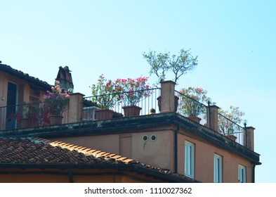 A roof-top terrace is filled with pink azalea, geraniums and trees in terracotta pots. Behind is a blue sky. Windows from the house open onto the terrace. Below are terracotta tiles of the roof.