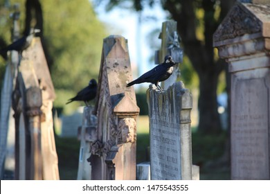 Rookwood, NSW Australia - August 11, 2019 - gravestones at Sydney's largest and oldest working cemetery cemetery - three black ravens sitting on gravestones