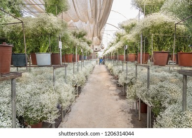 room of a floriculture with plants