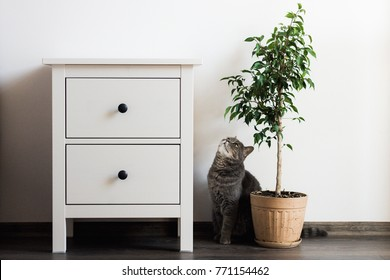 Room interior with bedside table, ficus plant and cat