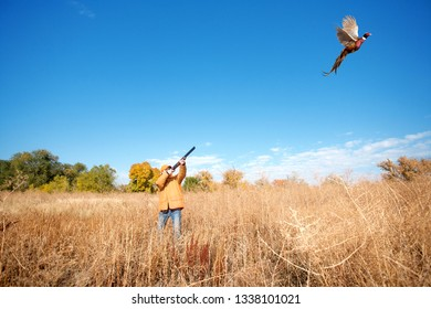 A rooser pheasant jumps up in front of a female hunter holding a shotgun.