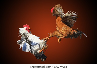 Rooster fight isolated on black and red as a symbol the conflict