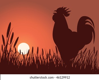 rooster greeting sunrise on a lawn, vector version is also available
