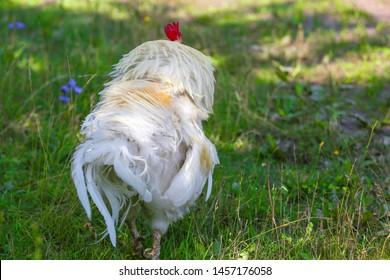 Ruffled Bird Images, Stock Photos & Vectors   Shutterstock