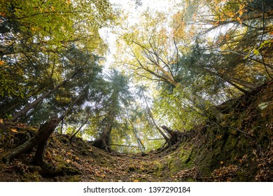 From the root to the crown of a Tree in the German forest