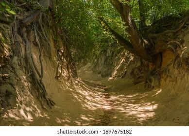 """Root gorge"" near Kazimierz Dolny, Poland, Europe. Popular touristic destination."