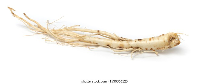 Root of Korean Bellflower (Platycodon grandiflorus) commonly known as Doraji isolated on white background. Is popular vegetable in Korea, also used in traditional Chinese medicine