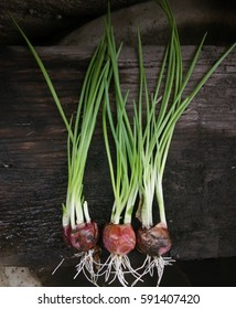 Root onion Vegetable have benefit