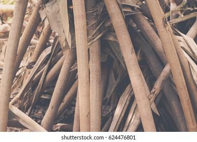 Root Pandanus tree