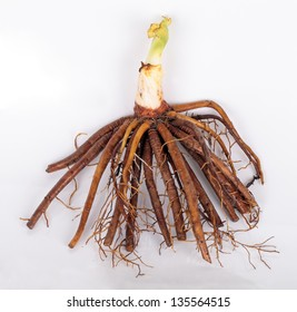 The root of the plant Daylily (Hemerocallis), for planting in the garden