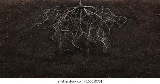 root and soil