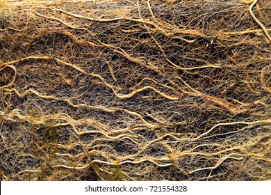 root tangle or root System with algae in a garden Pond, macro roots