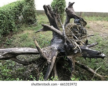 Root of tree for decoration