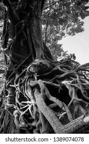 Root tree in forest. Monochrome