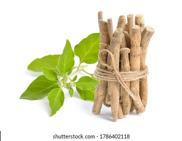 Root Withania somnifera, known commonly as ashwagandha, Indian ginseng, poison gooseberry or winter cherry