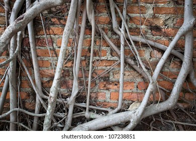 root wood on brick wall