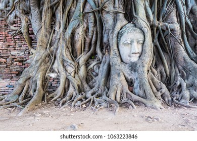 THE ROOTS AROUND THE HEAD OF BUDDHA IMAGE . unseen thailand the head of the statue that is on the root bodhi carried a large-headed gods.