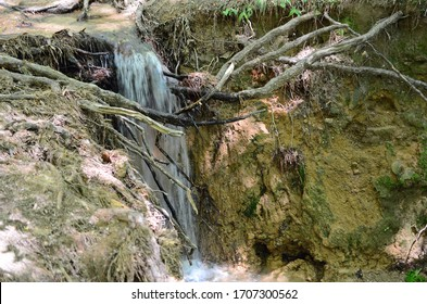 Roots are exposed after a rain when erosion washes away all the dirt along a hiking trail. The path and environment washed out as the water look the path of least resistance.