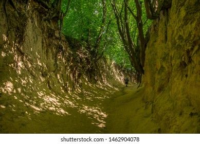 """""""Roots Gorge"""" in Kazimierz Dolny. Amazing gorge with trees, roots of old trees and shrubs, exposed as a result of soil erosion, near Lublin, Poland."""