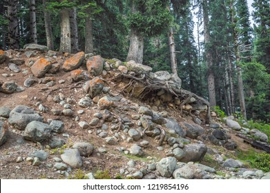 Roots of pine trees visible due to erosion landslide of the earth round boulders exposed