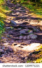 Roots, rocks and muddy hiking trail in the forest. Selective focus