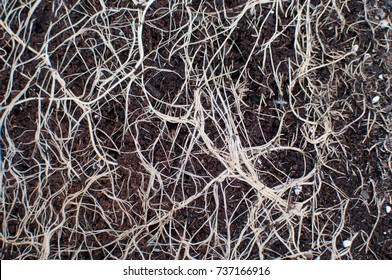 Roots in soil.