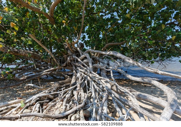Roots that cling to the rocky shoreline