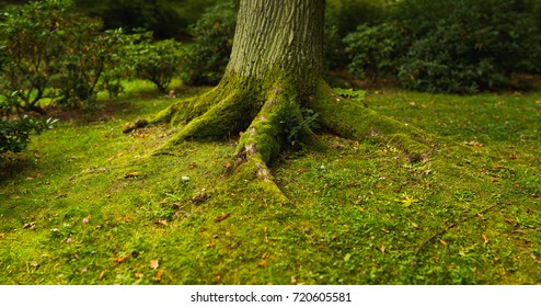 The roots of the tree in the moss