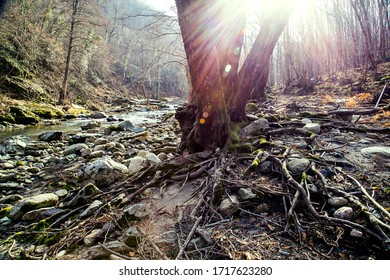 roots of a tree near riverbed in autumn
