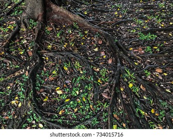 Roots of the tree on ground. Can be attributed to your work.
