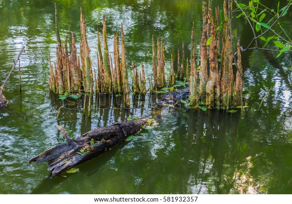 Roots of tree on water