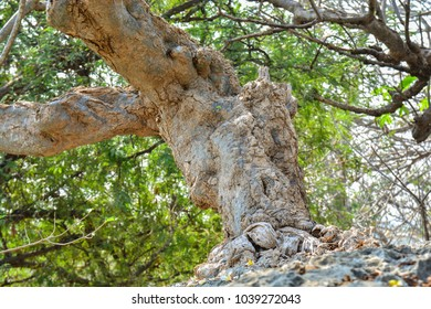 the roots and trunk of the tree on the rocks