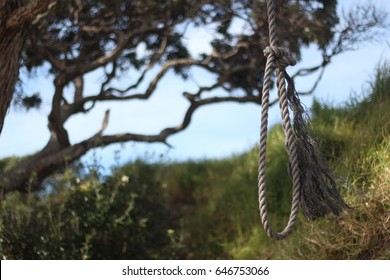 Rope hanging from Tree