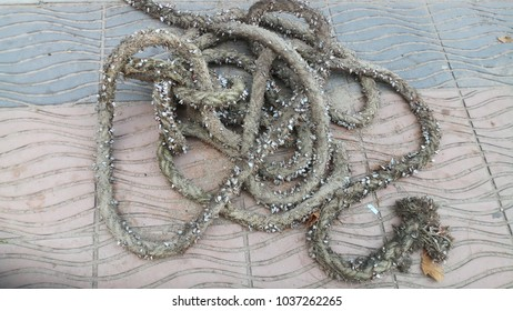Rope  on  the  pavement