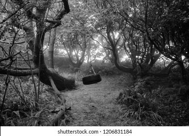 Rope Swing/Tyre Swing in the Woods