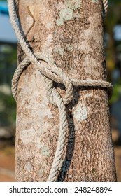 Rope tied on the tree