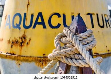 A rope is tied to a wooden mooring bollard with a marine buoy in the background in Melbourne, Australia