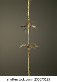 Rope under tension, the moment before splitting on brown background