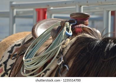 Roper's saddle with riatas