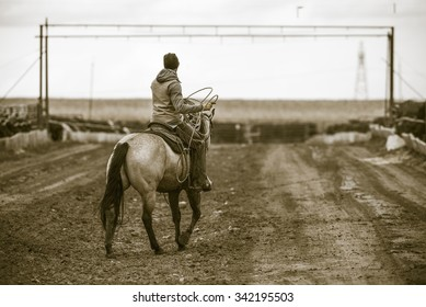 Roping Cattle on a Feedlot. Rural America.