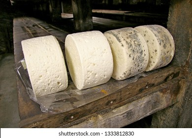 Roquefort France. Four large rings of Roquefort cheese on rack in cave. In varying stages of maturing. Leading from white to heavily veined.