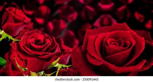 Rose against red petals