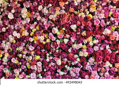 Rose Background.  Colorful rose wall background with different types of roses.